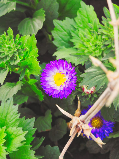 Beauty In Nature Blooming Close-up Day Flower Flower Head Fragility Freshness Green Color Growth Leaf Nature No People Outdoors Petal Plant