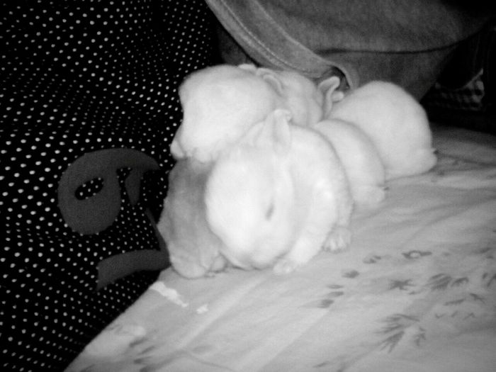 Baby rabbit sleeping under my blanket Close-up No People Animal Themes Baby Rabbits Black And White Photography Cute