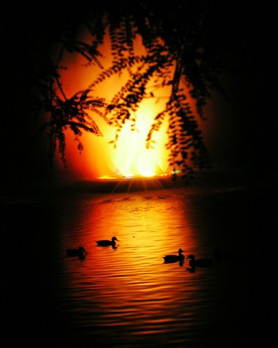 Sunset Reflection Water Nature Silhouette Lake Tranquility Scenics Outdoors Tree Beauty In Nature Tranquil Scene Landscape No People Night Sky Ducks Lightshow New Plymouth Paint The Town Yellow