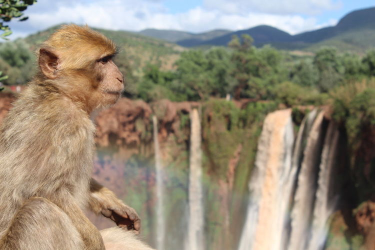 Monkey looking away on mountain