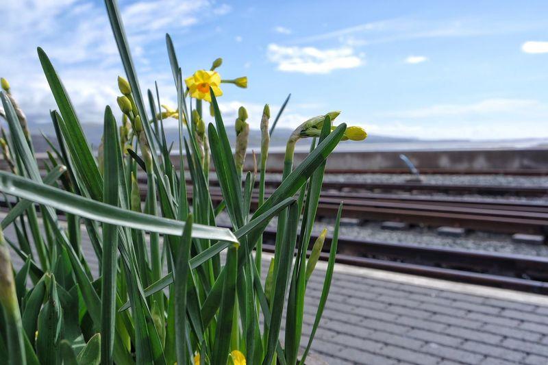 Porthmadog Wales Wales UK North Wales Ffestiniog Railway Train Tracks