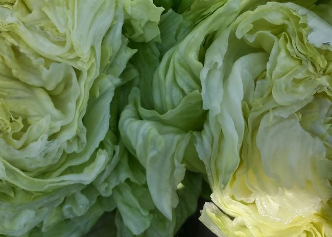Iceberg (head) lettuce. Lettuce Head Lettuce Green Color Close-up Full Frame Vegetable Healthy Eating Backgrounds Freshness No People Day Visual Feast