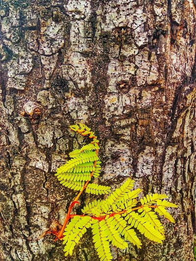 Sapling Sapling Tree Close Up Close Up Tree Close Up Photography Close Up Nature