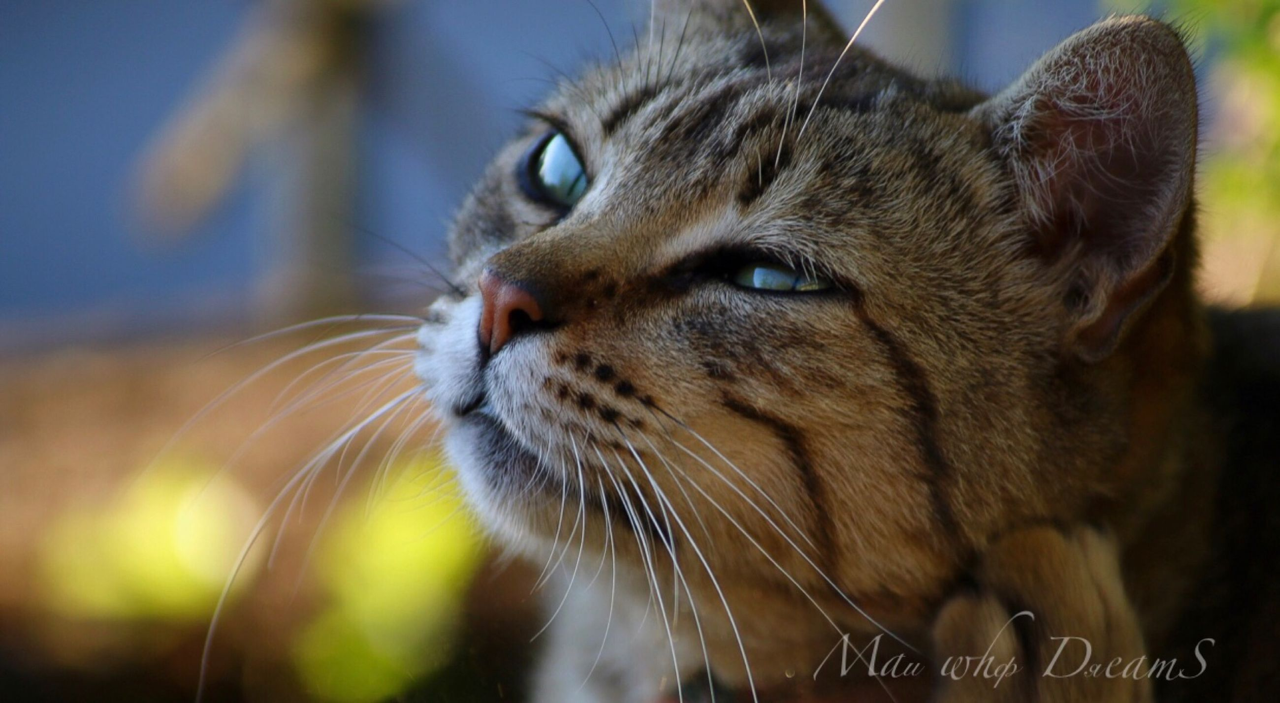 one animal, animal themes, mammal, animal, domestic, pets, cat, feline, domestic animals, whisker, close-up, vertebrate, domestic cat, focus on foreground, looking, animal body part, looking away, no people, animal head, day, mouth open, animal eye