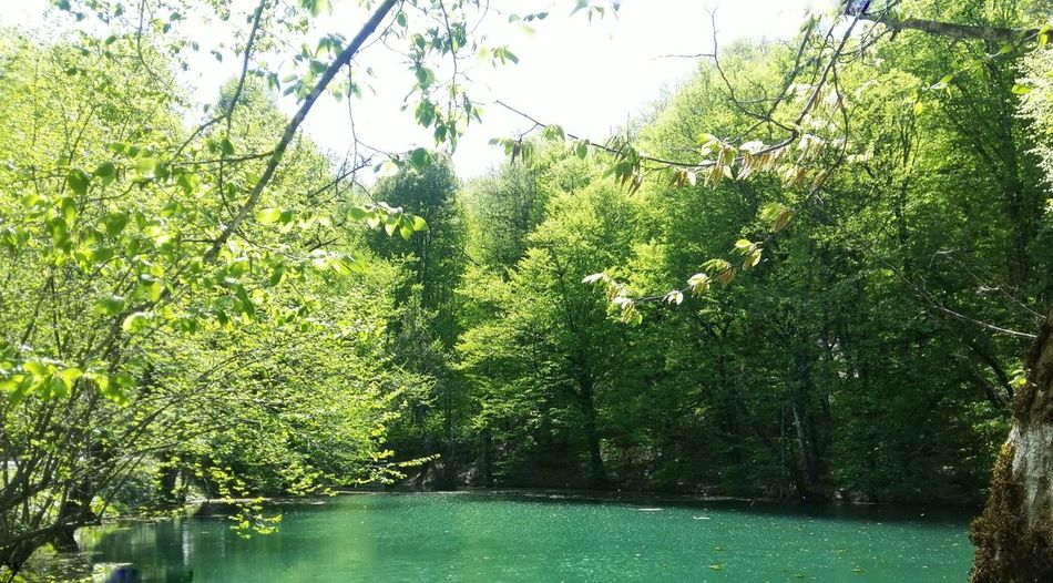 Green Color Nature Water Tree Day No People Growth Outdoors Beauty In Nature Freshness Bolu TURKEY Yedigöller Milli Parkı Yedigoller Reflection Nature Lake Art Is Everywhere Travel Destinations Neighborhood Map Place Of Heart Summer Exploratorium The Great Outdoors - 2018 EyeEm Awards
