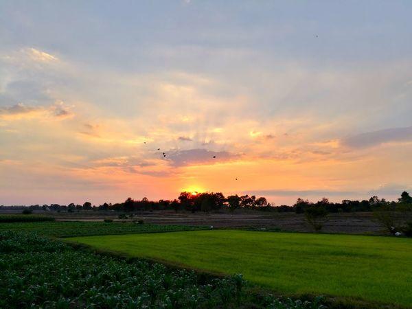 Flying Sunset Grass Bird Field Airplane Cloud - Sky