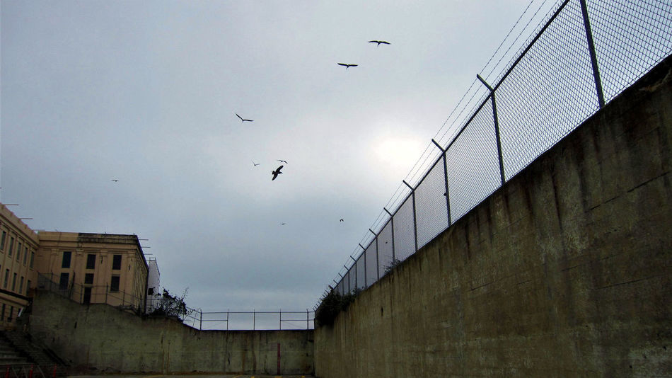At least the birds are free. Alcatraz Alcatraz Island Bay Area California Federal Penitentiary Freedom Jail San Francisco Seagulls Wall Abandoned Bird Birds Flying Golden Gate National Recreation Area National Park Service Optimism Prison Prison Yard Soaring Tourism Walled In