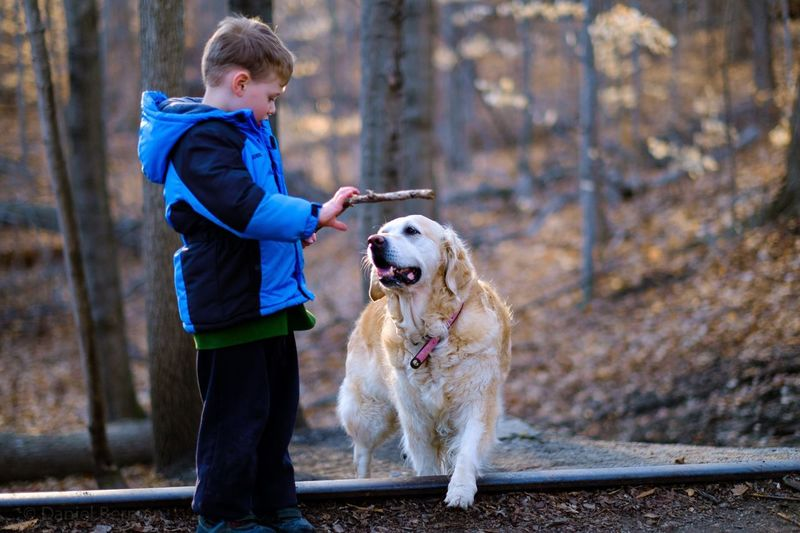 Side View Of Boy With Golden Retriever In Forest
