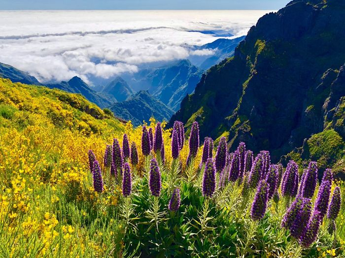 Beauty In Nature Scenics - Nature Mountain Plant Environment Landscape Flower