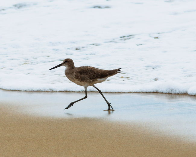 Animals In The Wild Bird Animal Wildlife One Animal Water Nature No People Day Outdoors Animal Themes Sea Ocean Beach Pacific Ocean