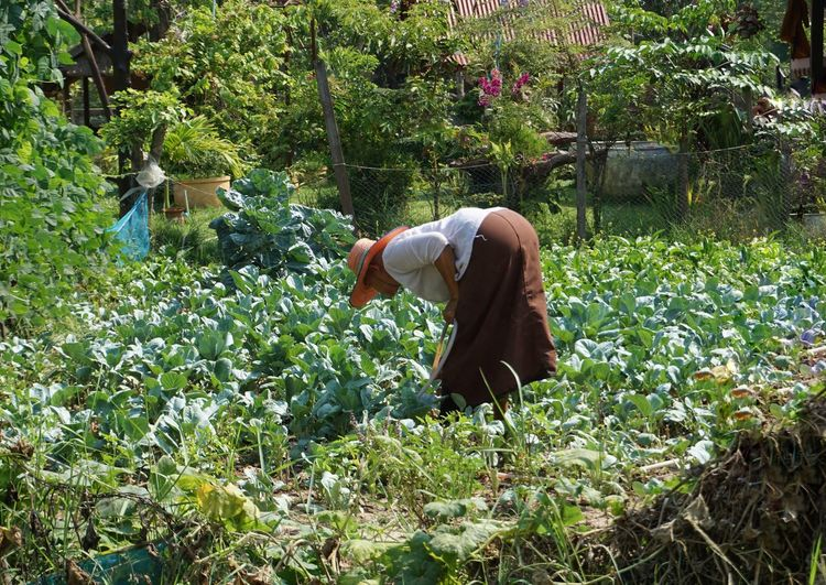 Mid adult woman working on farm