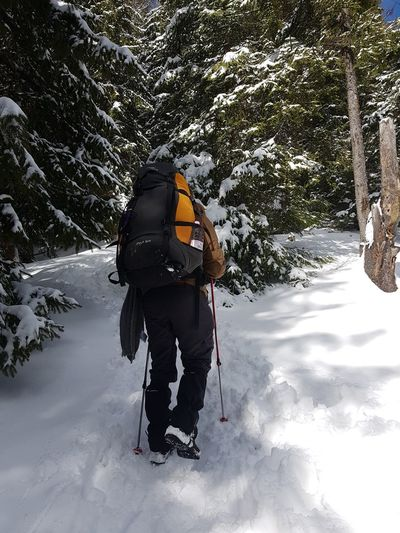 Activity Adventure Backpack Beauty In Nature Cold Temperature Day Full Length Hiking Leisure Activity Lifestyles Mountain Nature One Person Outdoors Real People Rear View Snow Sport Tree Warm Clothing Winter