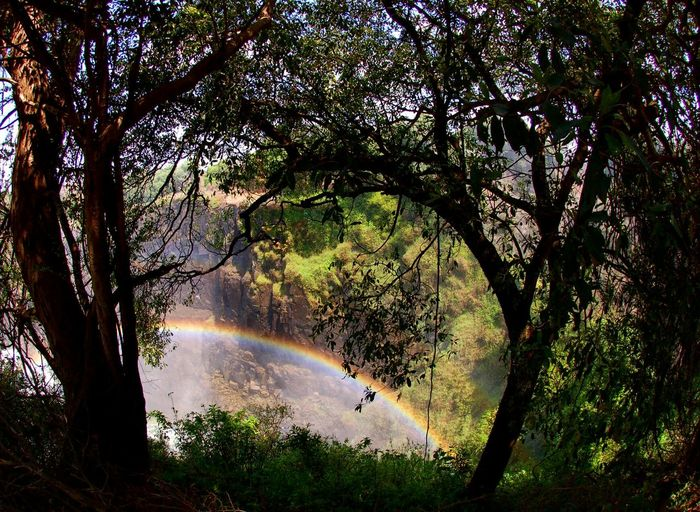 Victoria falls, rainbow Victoria Falls Africa Zimbabwae Tree Water Nature Beauty In Nature Tranquility Outdoors Branch No People Scenics Forest Day Sky Travel Travel Destinations Rainbow Your Ticket To Europe The Week On EyeEm EyeEmNewHere