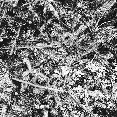 Leaves Blackandwhite Plants 沙树