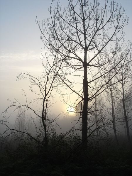 Beauty In Nature Branch Contre Jour Contre Jour.  Contre-jour Contrejour Day Fog Landscape Nature No People Outdoors Scenics Sky Sunset Tranquility Tree