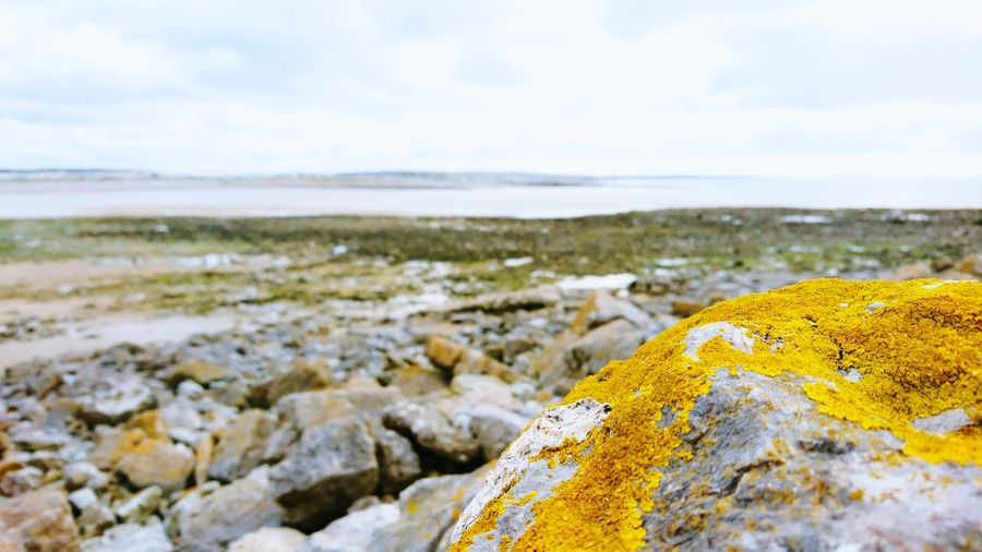 Low tide at Porthcawl Sea Water Beach Rock - Object Lichen Yellow Horizon Sky Horizon Over Water Close-up Seaweed Geology Algae