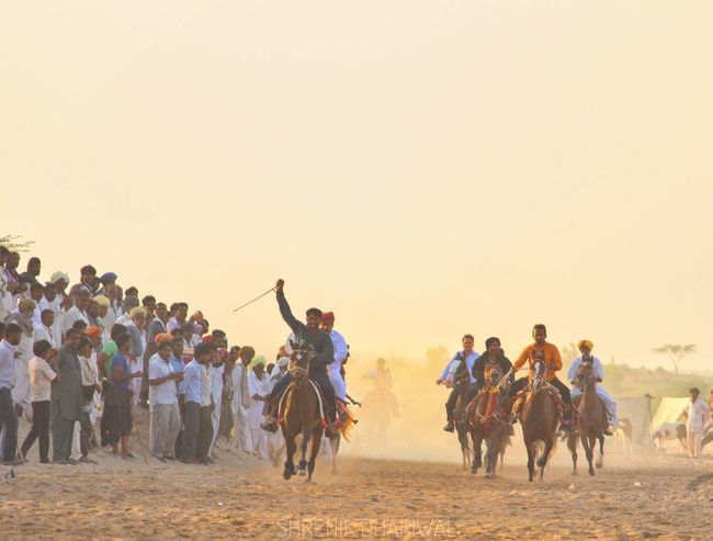 Desert Riding People Sunset Domestic Animals Travel Destinations Travel Barmer Arts Culture And Entertainment Barmer Tourism Barmer India Horserace Rajasthanistyle Barmerdiaries Rajasthantourism Rajasthan Rajasthantourismofficial Indiapictures Indian Culture  Indianphotographersclub Rajasthan Beauty Indianphotographer Sports Race Desert Horseback Riding