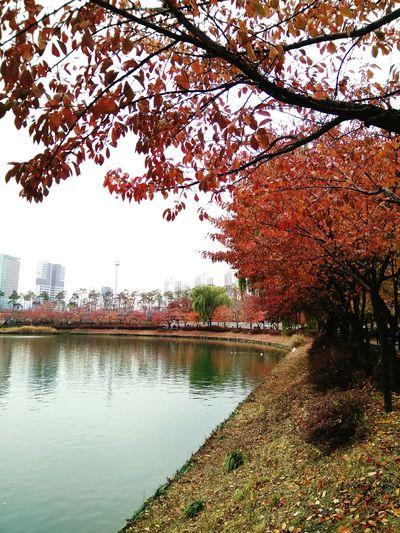石村湖水與岸上楓樹的美景 Seokchonlake Tree Outdoors Nature Lake 楓葉 石村湖 首爾 旅行 樂天塔 EyeEm EyeEm Best Shots Maple Tree Beauty In Nature Nature Good Shot Winter Red Take Photos Seoul, Korea Travel Enjoying Life Holidays💛