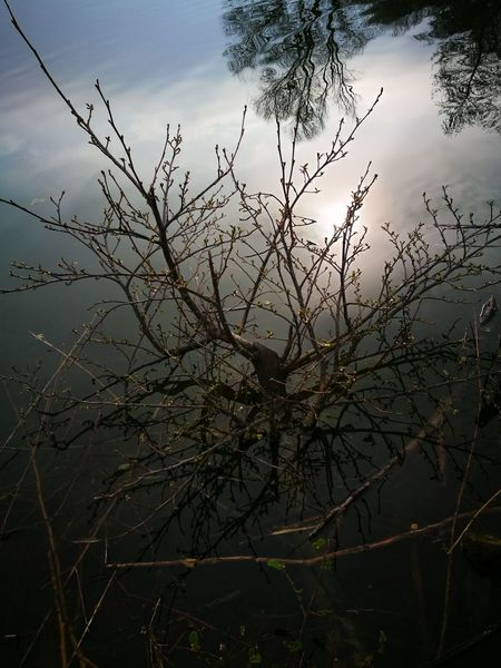 chromatic reflection in spring Springtime April Hot Spring New Life Bird Tree Water Tree Area Winter Sunset Branch Lake Rural Scene Reflection Bare Tree