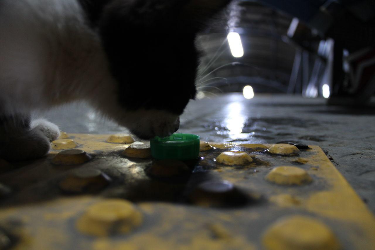CLOSE-UP OF CAT ON FLOOR AT ILLUMINATED NIGHTCLUB