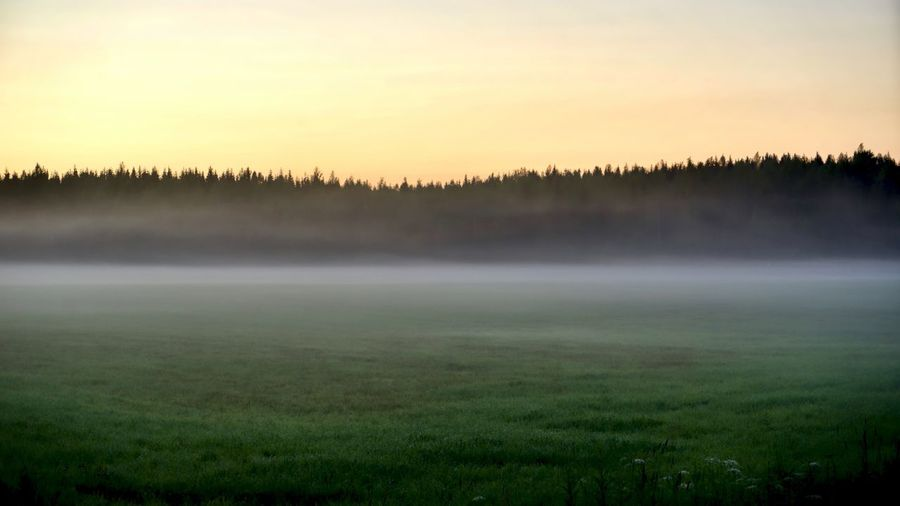 sunset in the countryside, at almost midnight, fog is setting in Fog Countryside Sunset Forest Finland Outdoors Field Grass Dream Dreamy Earth Paceful Beauty In Nature Plant Scenics - Nature Tranquil Scene Sky Tree Environment Tranquility Landscape No People Nature Idyllic Non-urban Scene Land Morning WoodLand Hazy