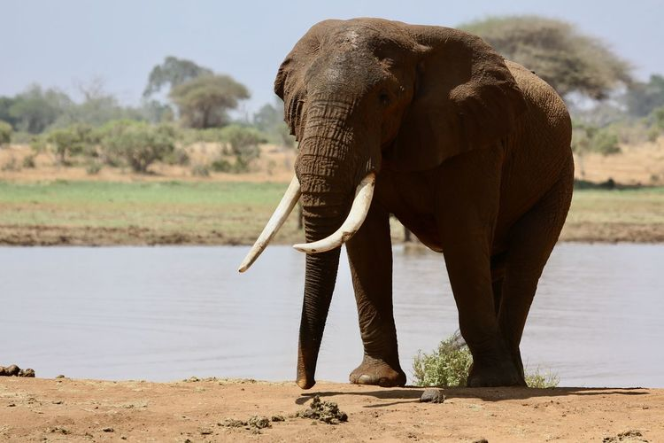 Elephant standing by tree against sky