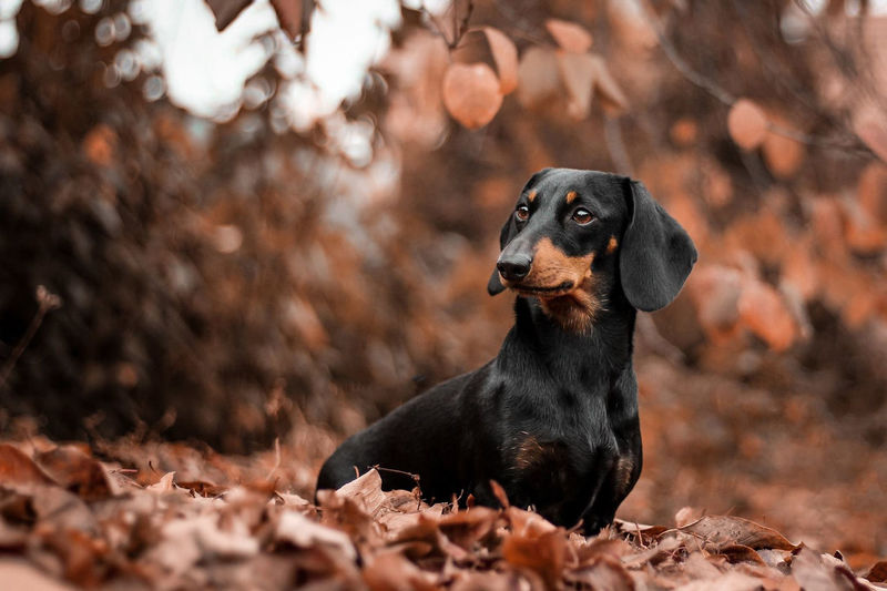 Dog Lover DogLove Dogs Dogs Of EyeEm Animal Themes Autumn Close-up Day Dog Dog Love Doglover Dogoftheday Dogslife Dogsofinstagram Dogstagram Dog❤ Domestic Animals Leaf Mammal Nature No People One Animal Outdoors Pets Tree Going Remote