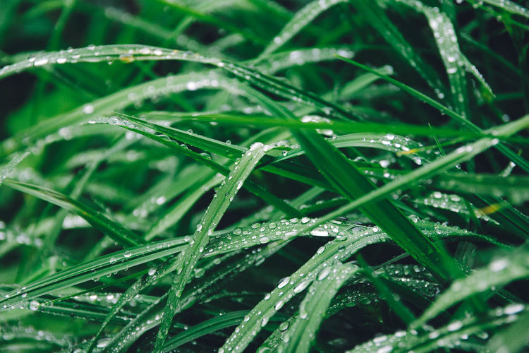 Beauty In Nature Close-up Day Drop Freshness Grass Green Color Growth Nature No People Outdoors Rainy Water