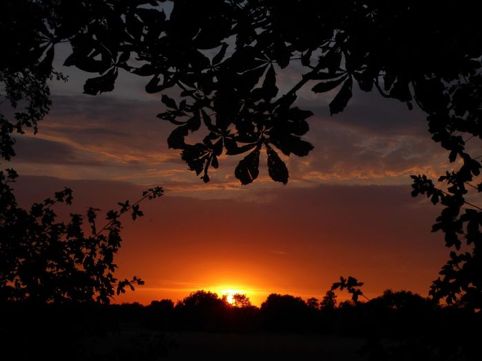 Everytime amazing to see🤗 Sundown Beauty In Nature Simple Beauty Simple Photography Silhouette For My Friends🙄🙋♀️ Happy Moment♥ Lucky Me🦄 Happyness Einfach Schön Hier. Yesterday Evening Tree Sunset Backgrounds Silhouette Beauty Sun Tree Trunk Sky Landscape