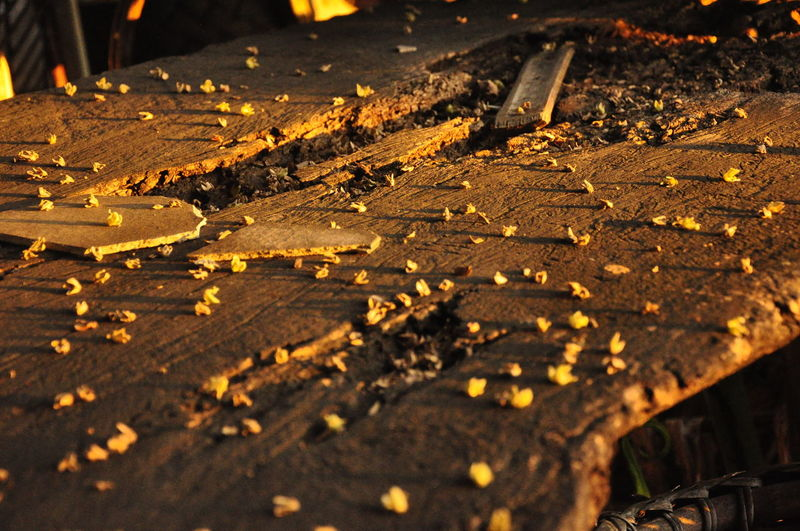 Close-up of old broken wooden plank
