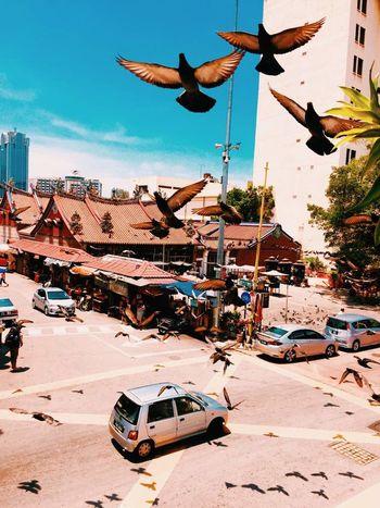 鸽子 Flying Transportation Air Vehicle Bird Sky Car Group Of Animals Day Architecture City