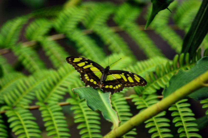 Butterfly Wide Wings Moments Of Green Flora Fauna Fragile Beauty Atmospheric Nature Outdoors Leaves Tropical Paradise Nature