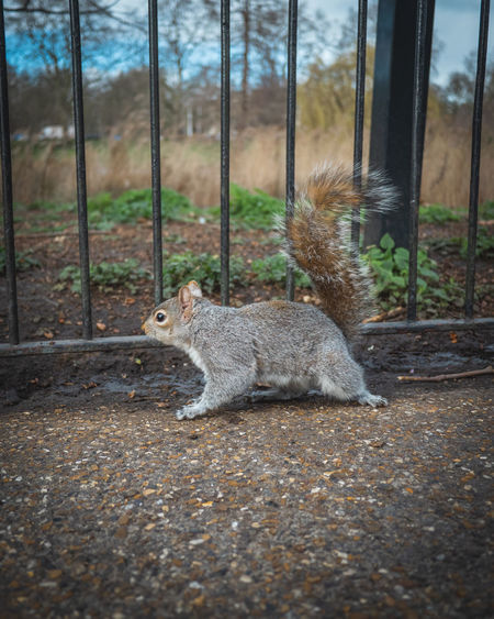Squirrel on field by trees