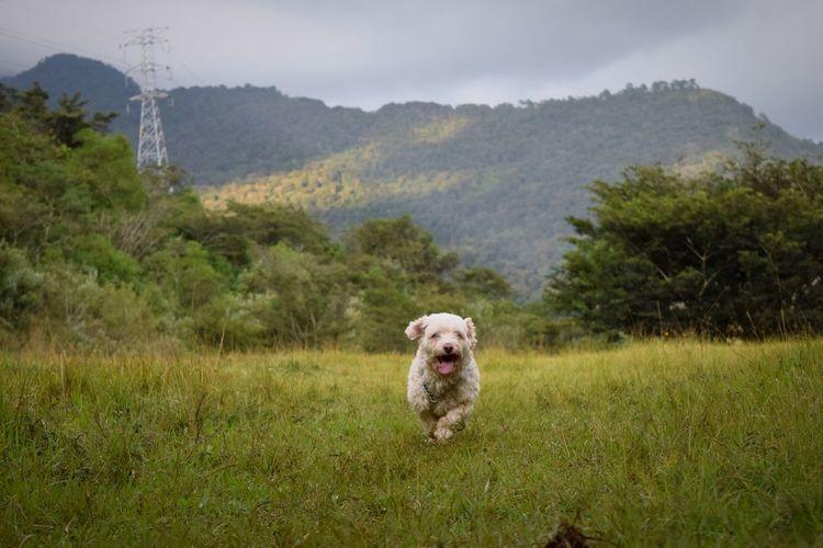 Juguete IV Dog Pets Maltese Dog D3300 Nikond3300 Nature Mexico