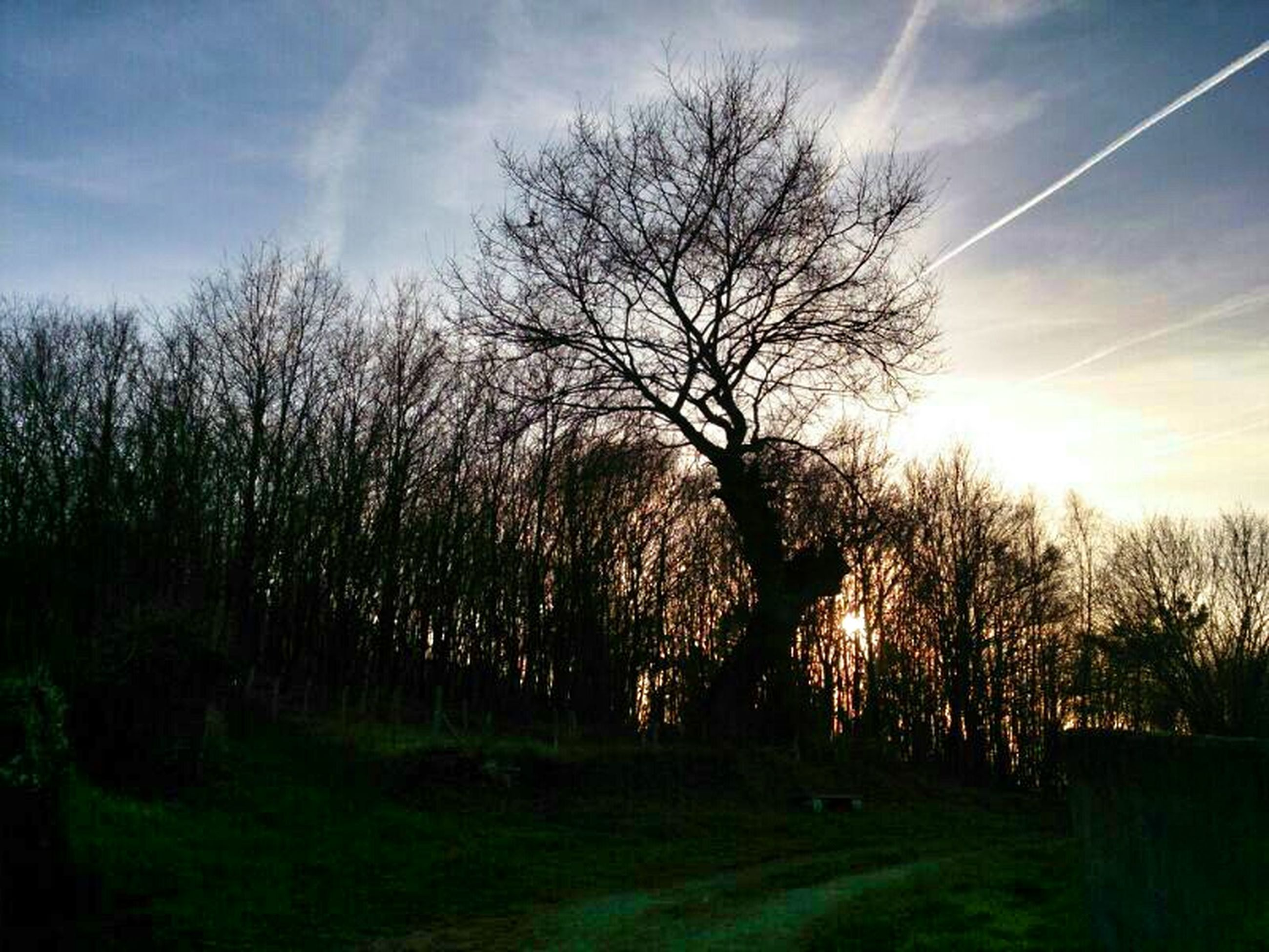 tree, bare tree, sky, tranquility, tranquil scene, landscape, scenics, field, beauty in nature, nature, branch, cloud - sky, grass, sunlight, tree trunk, growth, sunset, cloud, silhouette, non-urban scene