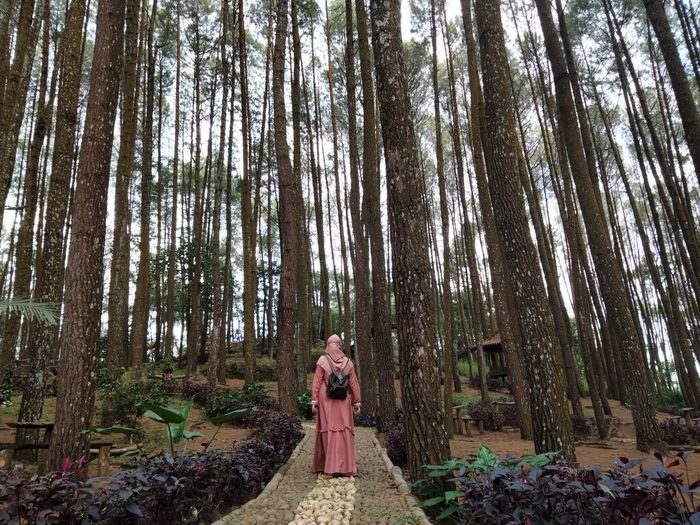 Woman standing amidst trees in forest