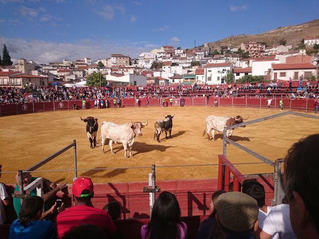 Plaza De Toros Bulls Madrid España🇪🇸