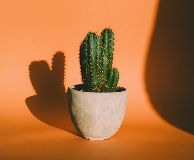 Close-up of potted plant over orange background
