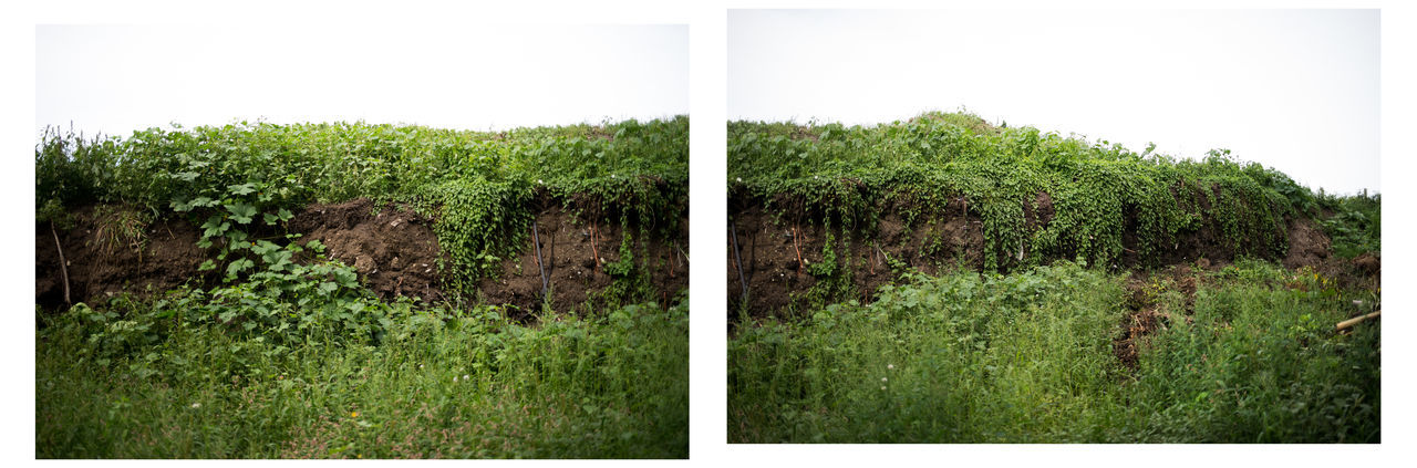 Compost Pile on a farm Compost Compost Pile Diptych/Triptych Dirtbike Farm Farm Life Horizontal Landscape Landscape Photography Massachusetts No People Overgrowth