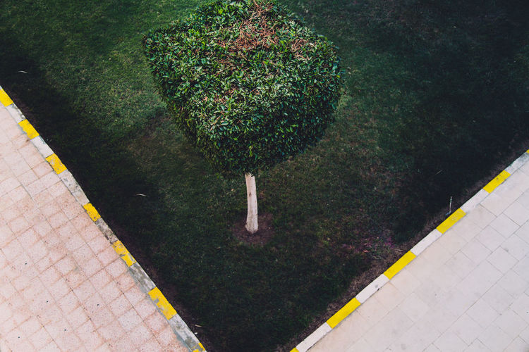 High angle view of small tree in garden