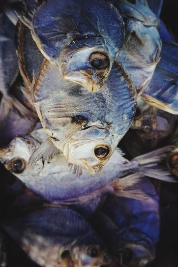 Salted fish Close-up Animal No People Animal Themes One Animal Fish Seafood Vertebrate Food And Drink Animal Wildlife Healthy Eating Animal Body Part Food Animals In The Wild Wellbeing Freshness Day Indoors  High Angle View Animal Head