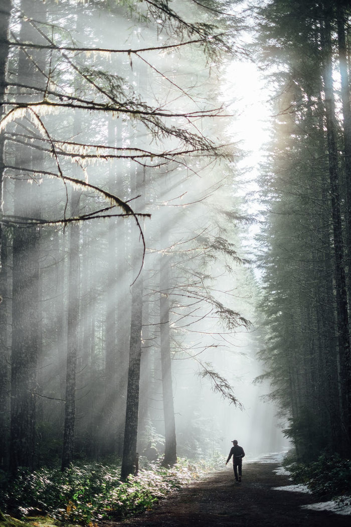 Man walking on dirt road passing through forest