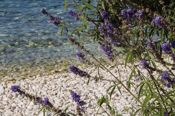 lavanda Kefalonia, Greece Hello World Taking Photos Nature Relaxing EyeEm Best Shots Beach Beauty In Nature Flower Fragility Nature No People Outdoors Plant Sea Water Freshness
