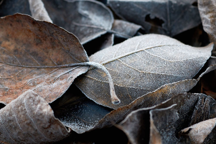 Close-Up Of Dried Leaves