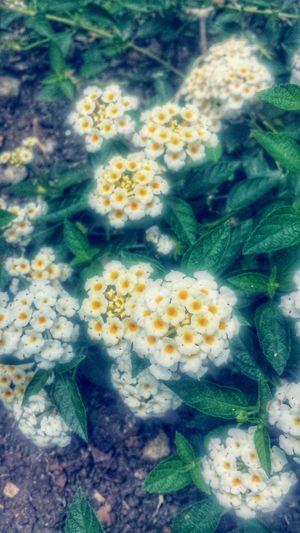 Flowers Flowerporn Flower Collection Flowersgarden