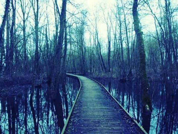 The Wind Of Change Bridge Forest Trees Escape Blue Green Nature Water Waterreflections
