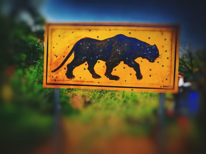 Panther heart. Thai Thailand Photos Thailand Thailand🇹🇭 EyeEm Panther Road Sign Yellow Communication Road Guidance Close-up Crossing Sign Pedestrian Crossing Sign Warning Sign Pedestrian Sign Railroad Crossing Road Warning Sign Information Symbol Railway Signal Do Not Enter Sign No Smoking Sign Speed Limit Sign Forbidden Red Light Stop - Single Word Stop Sign Information Sign Warning Information