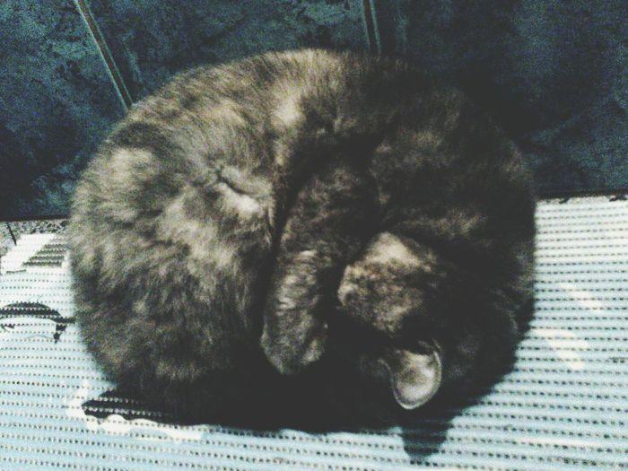Bathroom Sleeping Cat Mysweethoneycat ILoveHer❤