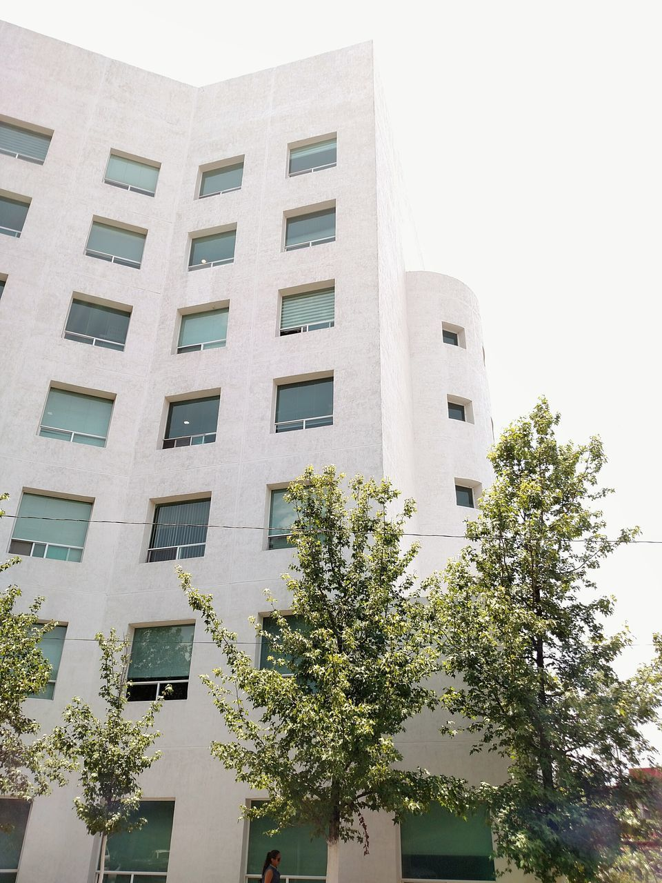 architecture, building exterior, built structure, low angle view, window, day, no people, outdoors, growth, tree, city
