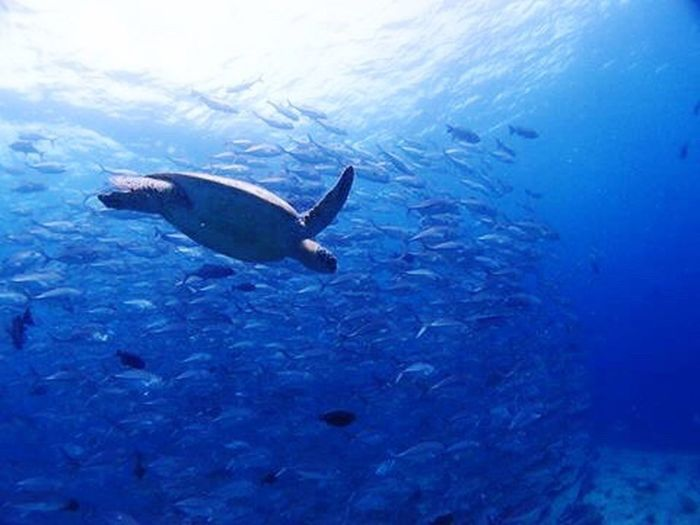 Love ocean Overseas Nature I Love It ❤ Beautiful Day Blue Sea Underwater Photography Underwater Diving Sea Sea Turtle Fish